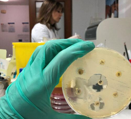 Interacción sinérgica de antibióticos